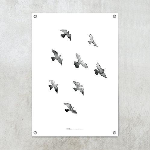 Birds | Tuinposter