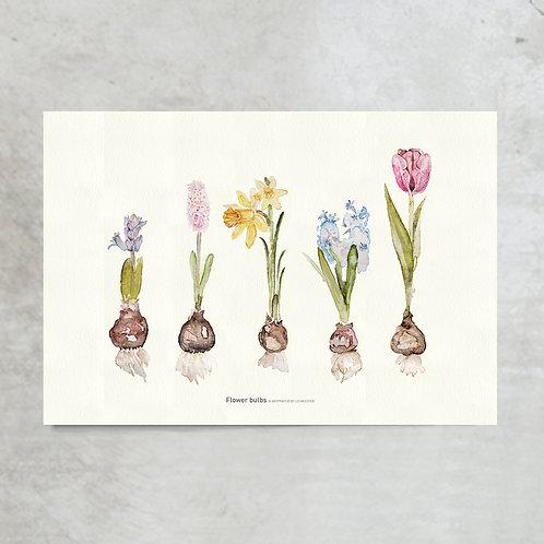 Flowers bulbs