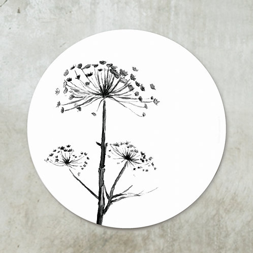 Dried hogweed black | Deco circle