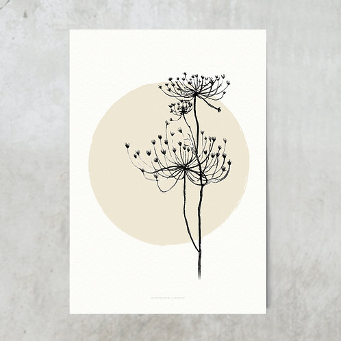 Hogweed beige circle | Nude