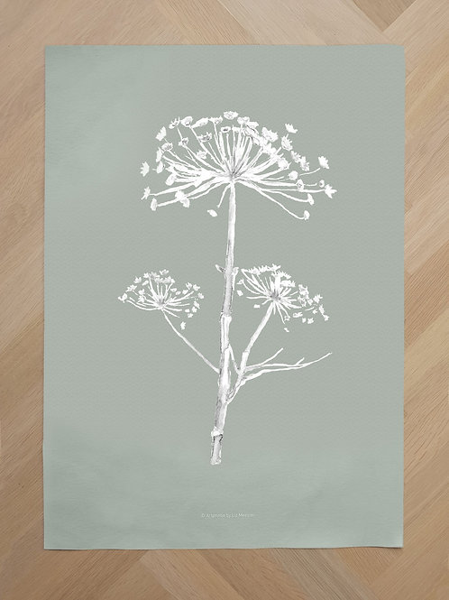 Canvas | White hogweed on green