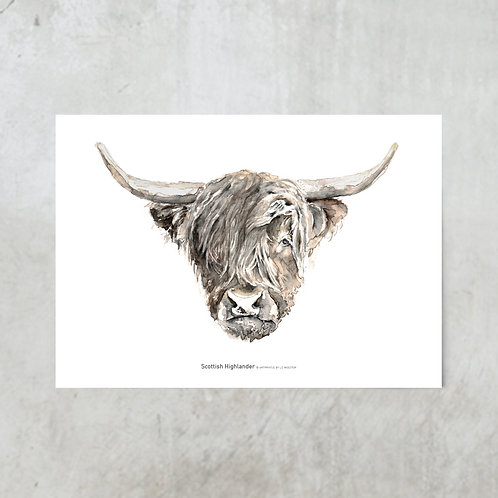 Scottish Highlander | Tuinposter 300x420mm