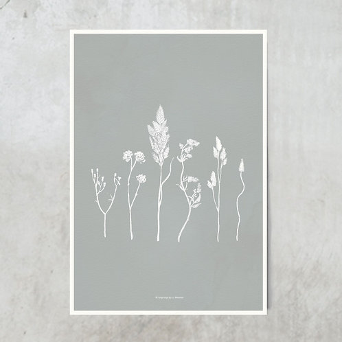 Dried flowers | White on blue grey