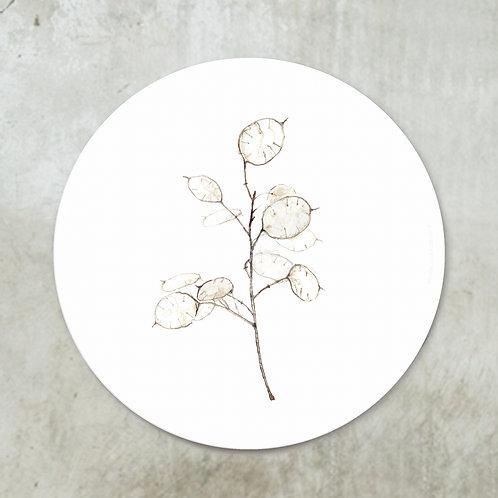Lunaria annua | Deco circle