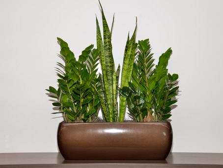 You can grow these types of plants
