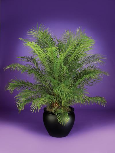Plant & Planter Guide