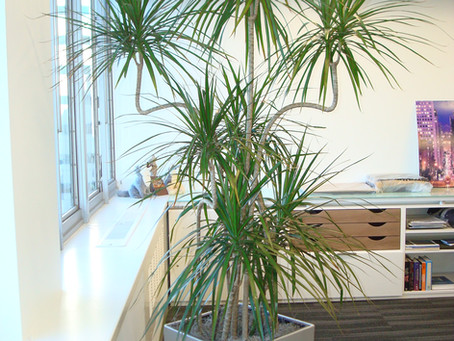 What are the benefits of having plants in your environment?