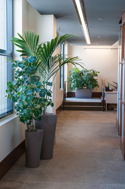 Taupe Planters