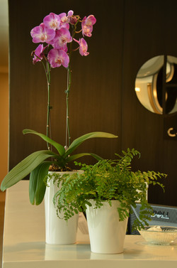 Orchid & Fern