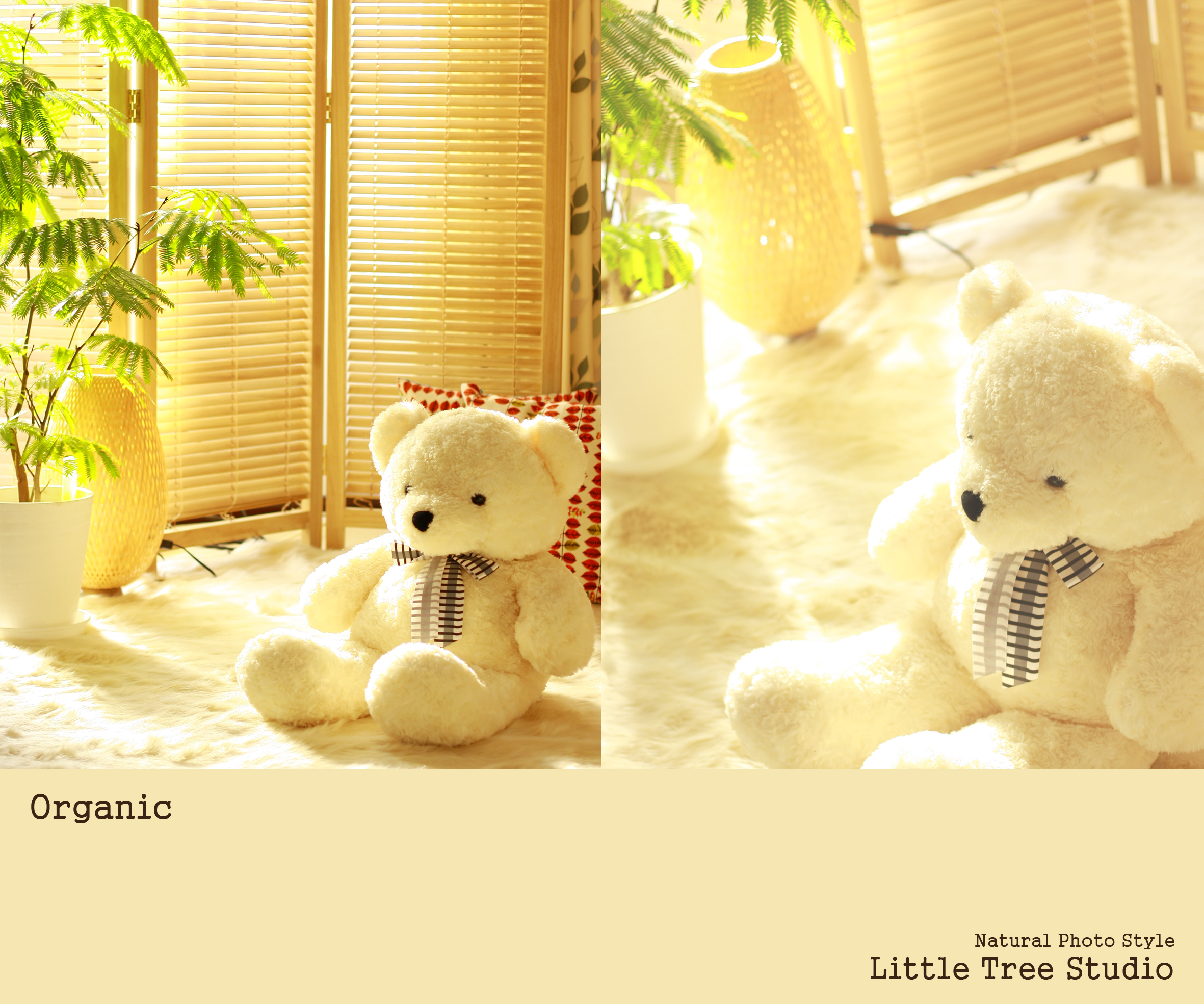 little tree organic set.JPG