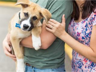 Puppy Love! Austin & Sydney