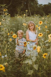 oak-rest-farms-sunflowers-burlington-wi-