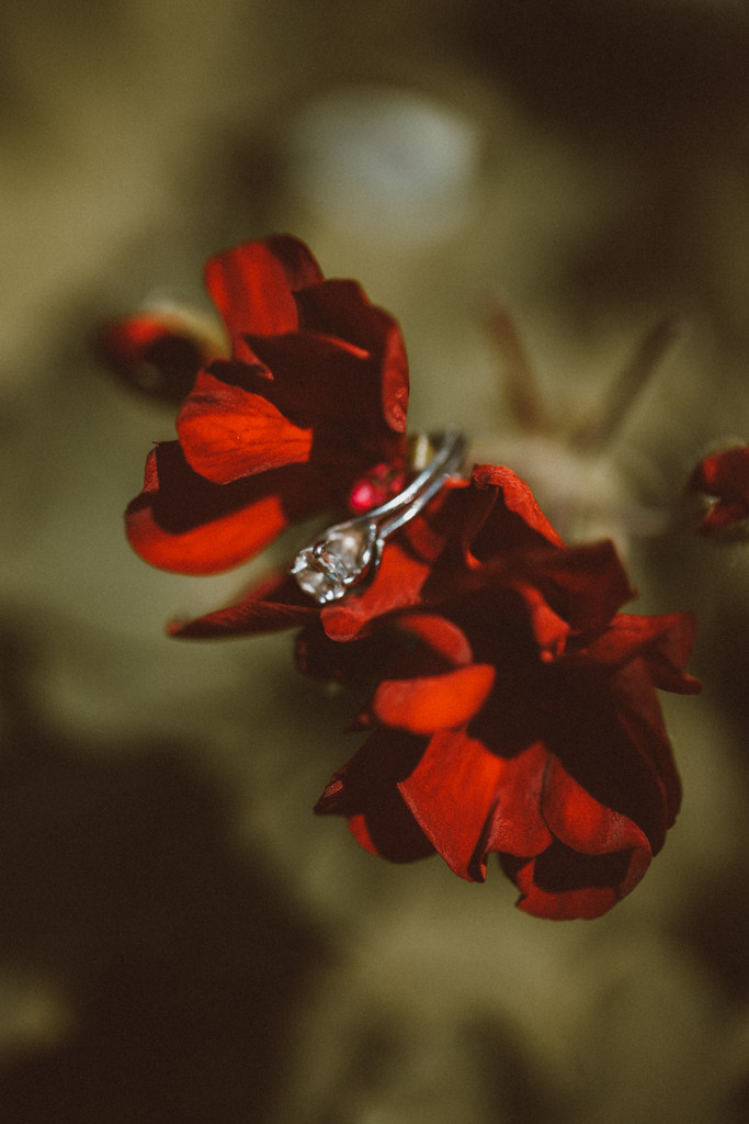 Wedding ring close up. Lifestyle Photography by Anna Gutermuth.