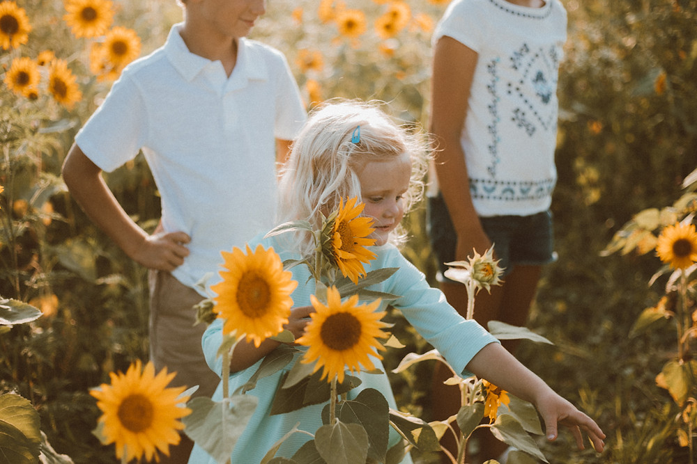 Little girl reaching for another sunflower for her bouquet. Lifestyle Photography by Anna Gutermuth.