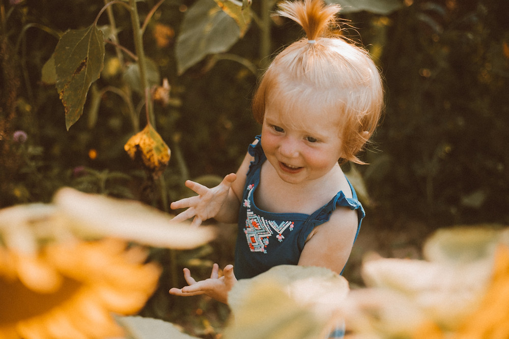 Toddler stands in the giant sunflowers. Lifestyle Photography by Anna Gutermuth.