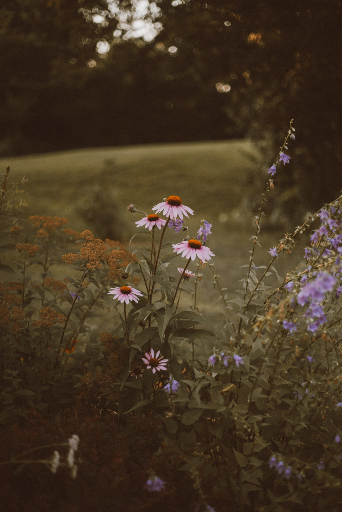 Summer Lifestyle Photography by Anna Gutermuth.