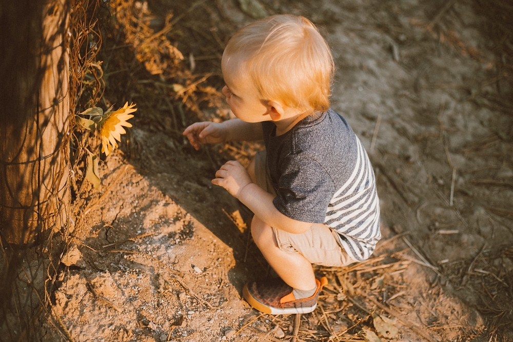 Little boy crouches down to inspect a sunflower. Lifestyle Photography by Anna Gutermuth.