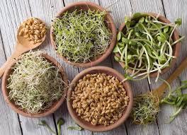 """Les graines germées : ces """"bombes"""" nutritionnelles"""
