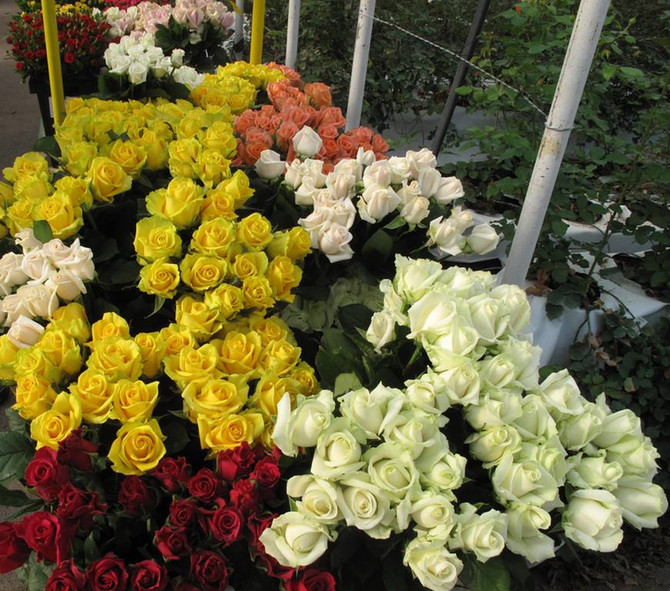 Our Bonus Program: Tour Len Busch Roses