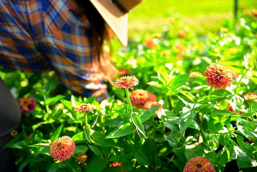 Green Earth Growers