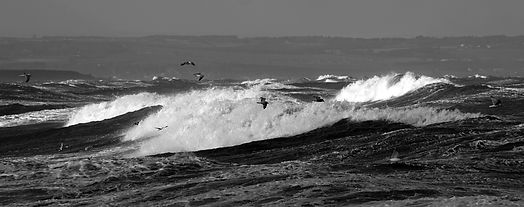 Wave Gulls in the Bay.jpg