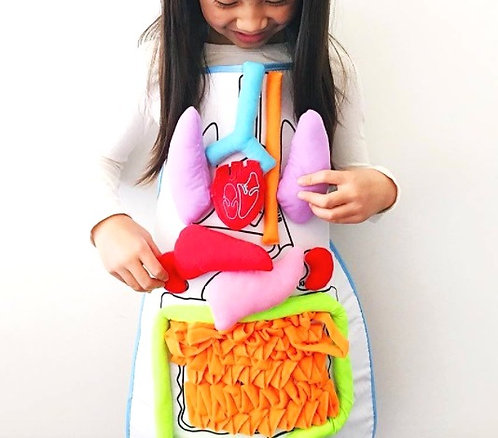 Organ Anatomy Apron