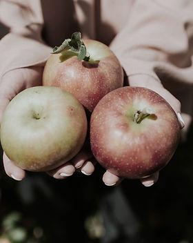 Pommes Pirouette / Bio / Vergers de la vallée