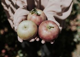 Pommes Elstar / Vergers de la vallée / Namur / Wallonie