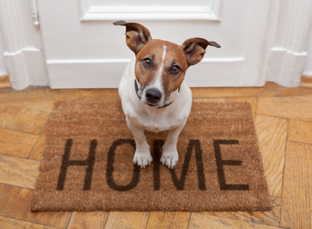 5 Reasons to Choose The Urban Dog Group to Help Find Your New Home