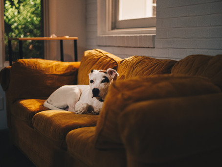 How to Keep Your Pets Calm When They're Home Alone