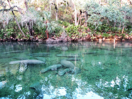Central Florida Bucket List for Fall