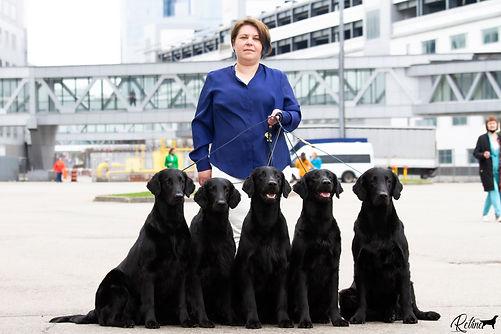Eurasia, Выставка собак Евразия, прямошерстный ретривер