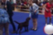 Stenveyz Sky Spirit puppies, Стенвейз Скай Спирит дети