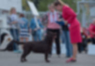 DefinoFortuna, Stenveyz Sky Spirit puppies, Стенвейз Скай Сприт дети, Ретлайн, Retline kennel