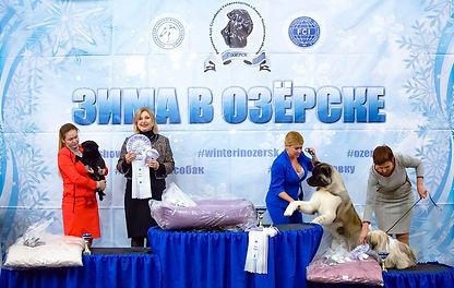 Зима в Озерске, выставки собак, Касли, dogshow