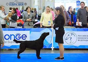 Евразия 2019, dogshow, Retline