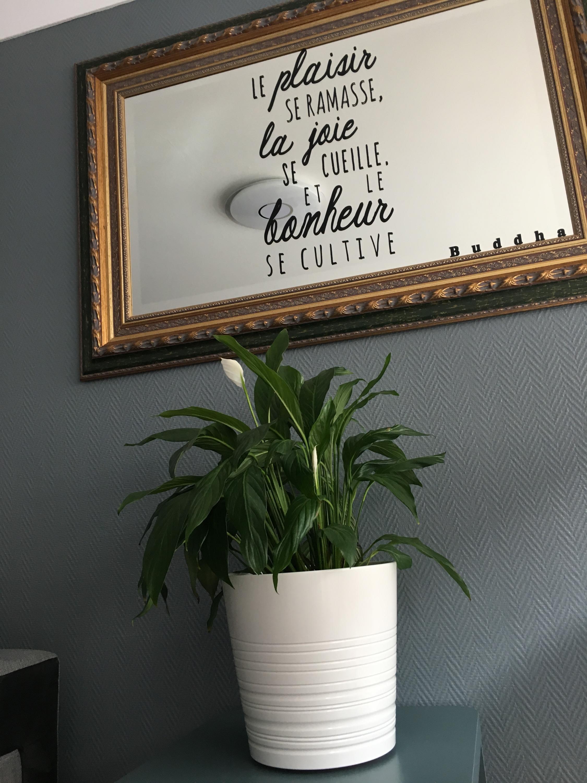 Détail plante naturelle