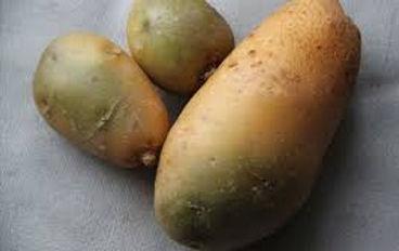 Веганские рецепты. Вегетарианские блюда. Вред картофеля