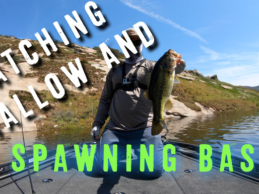 Catching shallow BASS on SPAWNING Beds
