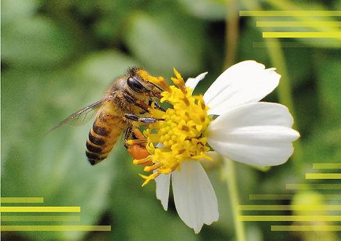 abeille-03.jpg