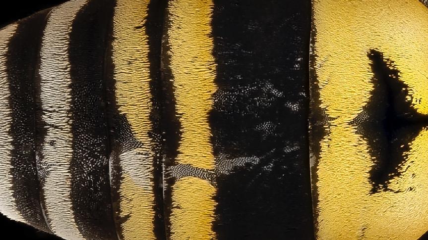 texture abeille_Plan de travail 1.tif