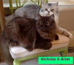 Penny's - Nicholas & Ariana