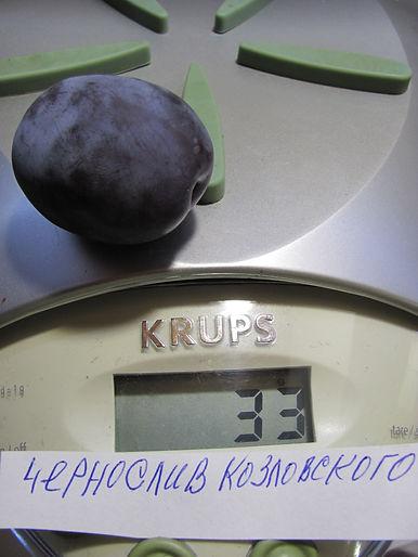 Чернослив Козловского.JPG