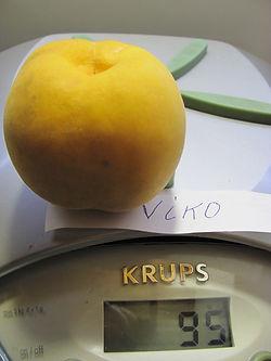 Viko (2).JPG