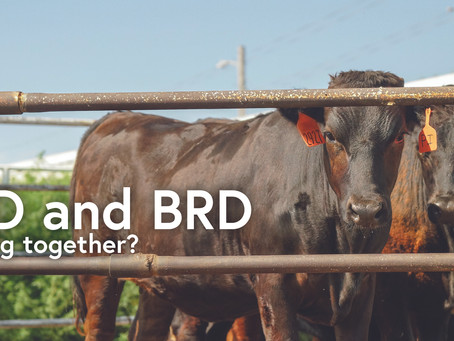 BVD and BRD Working Together?