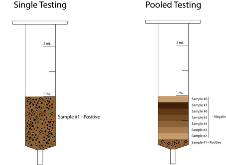The Truth (and definition) of Pooling Samples