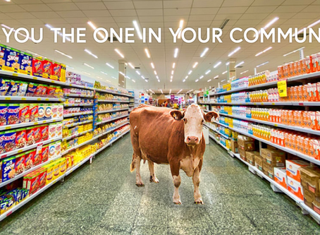 COVID-19 in your community is like a BVD-PI in your pen