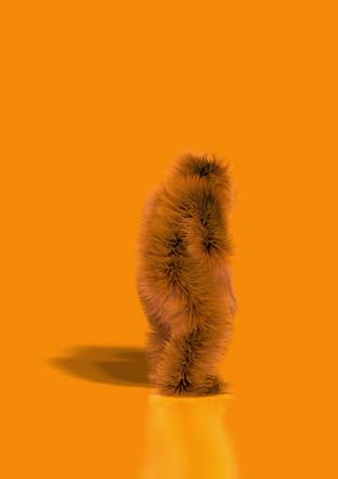 Samba Dancin'