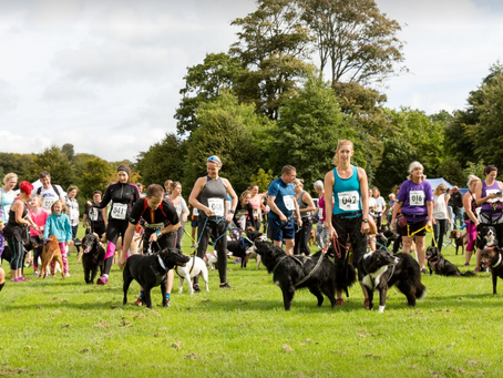 Brighton's K9 Challenge, raising awareness for the charity 'Support Dogs'.