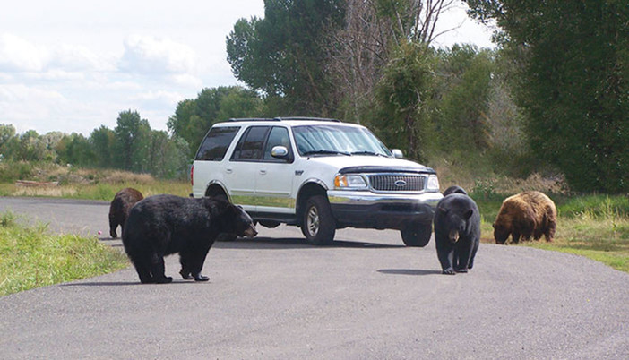 Yellowstone Bear World